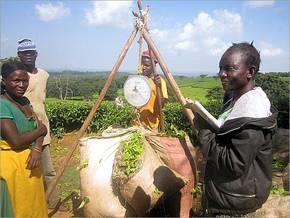 Wiegen der geernteten Teeblätter in Thyolo